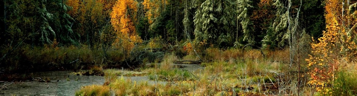 wetlands-Nelsonwebname