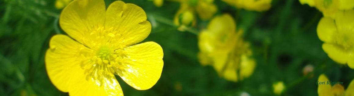 buttercup-webname