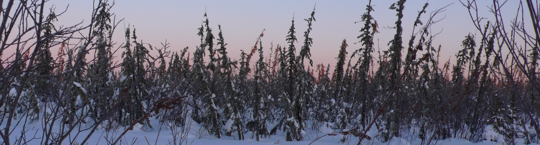 bog-winter